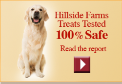 dog treats online